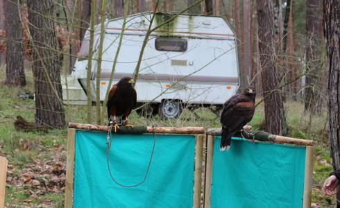 Falconrider